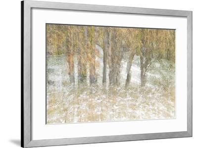 Motion Trees 3-Moises Levy-Framed Photographic Print