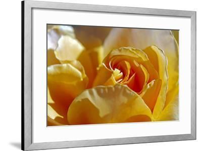 Three-SD Smart-Framed Photographic Print
