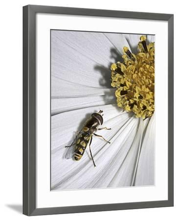 One-SD Smart-Framed Photographic Print