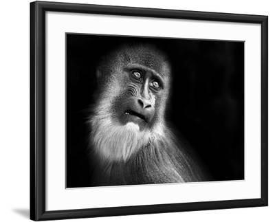 Scared-SD Smart-Framed Photographic Print