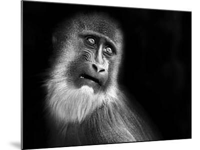 Scared-SD Smart-Mounted Photographic Print