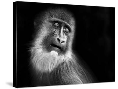 Scared-SD Smart-Stretched Canvas Print