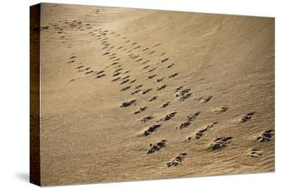 Crossing Paths-SD Smart-Stretched Canvas Print