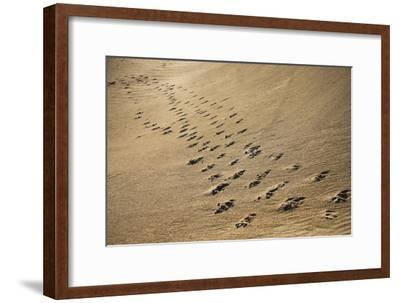 Crossing Paths-SD Smart-Framed Photographic Print