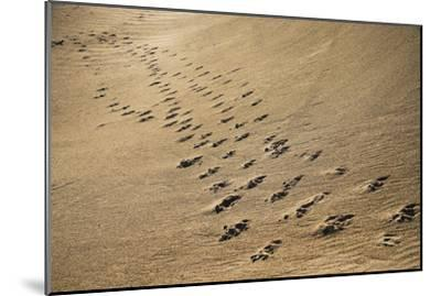 Crossing Paths-SD Smart-Mounted Photographic Print