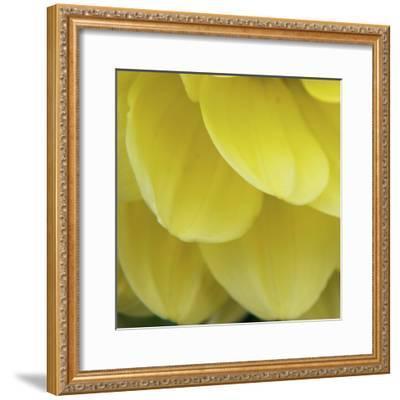 Dahlia Delicacy-Karen Ussery-Framed Premium Photographic Print