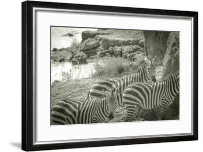 Watering Hole-Joani White-Framed Premium Photographic Print