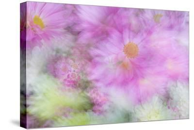 Flower Impressions I-Kathy Mahan-Stretched Canvas Print
