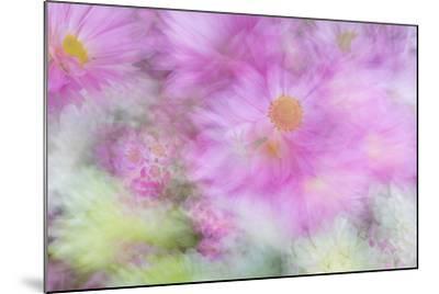 Flower Impressions I-Kathy Mahan-Mounted Photo