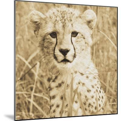 Young Cheetah-Susann Parker-Mounted Photo