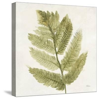 Forest Ferns I-Albena Hristova-Stretched Canvas Print