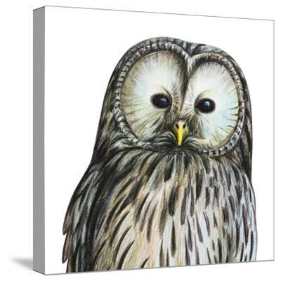 Gray Owl Portrait Drawing- viktoriya_art-Stretched Canvas Print
