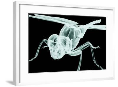Xray Image of an Insect Isolated on Black with Clipping Path. 3D Illustration.- posteriori-Framed Art Print