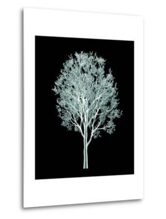 Xray Image of a Tree Isolated on Black- posteriori-Metal Print