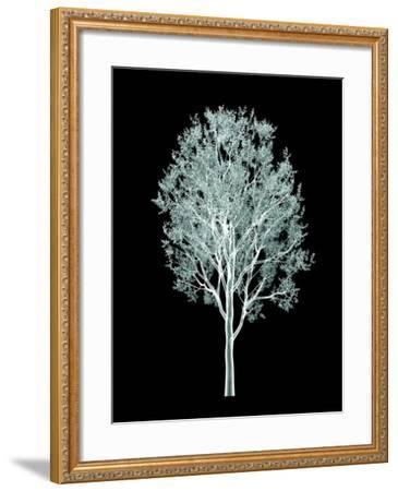 Xray Image of a Tree Isolated on Black- posteriori-Framed Art Print