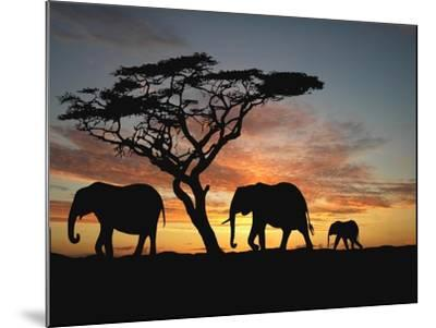 Group of Elephant in Africa-TebNad-Mounted Art Print