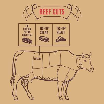 Vintage Butcher Cuts of Beef Scheme Vector Illustration- dimair-Framed Art Print