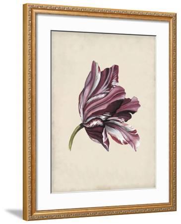 Antique Tulip Study III-Naomi McCavitt-Framed Art Print