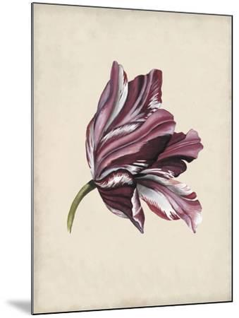 Antique Tulip Study III-Naomi McCavitt-Mounted Art Print
