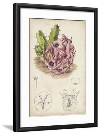 Antique Cactus III-Curtis-Framed Art Print