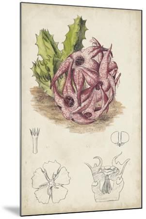Antique Cactus III-Curtis-Mounted Art Print