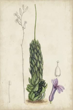 Antique Cactus IV-Curtis-Framed Art Print
