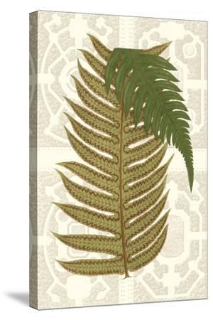 Garden Ferns II-Vision Studio-Stretched Canvas Print