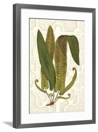 Garden Ferns I-Vision Studio-Framed Art Print