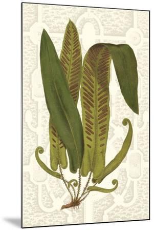 Garden Ferns I-Vision Studio-Mounted Art Print