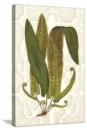 Garden Ferns I-Vision Studio-Stretched Canvas Print