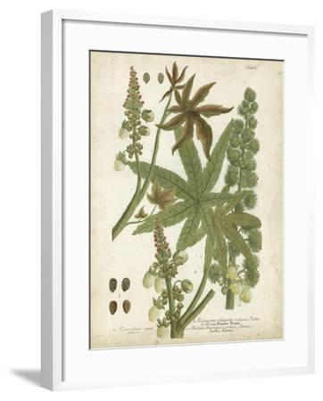 Weinmann Tropical Plants I-Johann Weinmann-Framed Art Print