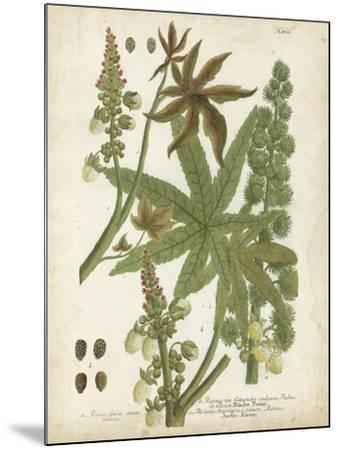 Weinmann Tropical Plants I-Johann Weinmann-Mounted Art Print