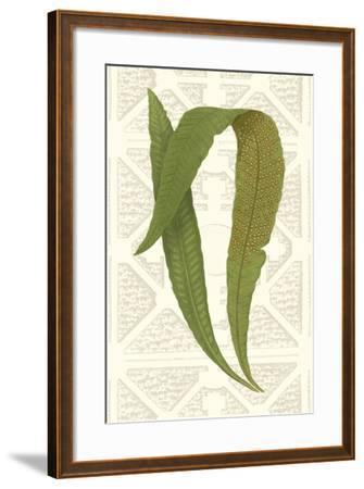 Garden Ferns IV-Vision Studio-Framed Art Print