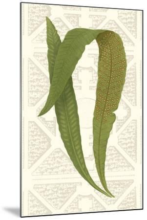 Garden Ferns IV-Vision Studio-Mounted Art Print