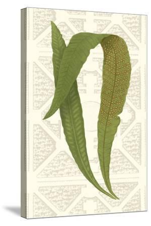 Garden Ferns IV-Vision Studio-Stretched Canvas Print