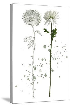Botany Flower IV-Melissa Wang-Stretched Canvas Print