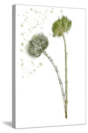 Botany Flower V-Melissa Wang-Stretched Canvas Print