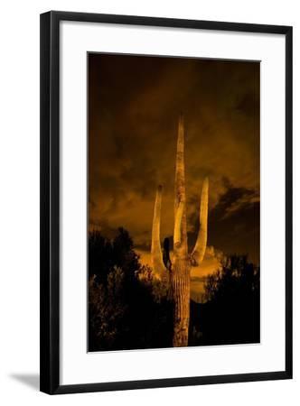 Saguaro Cactus At Night, Arizona-Steve Gadomski-Framed Photographic Print