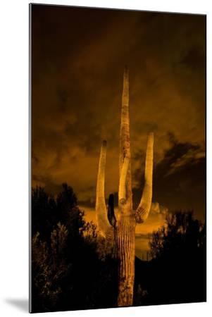 Saguaro Cactus At Night, Arizona-Steve Gadomski-Mounted Photographic Print