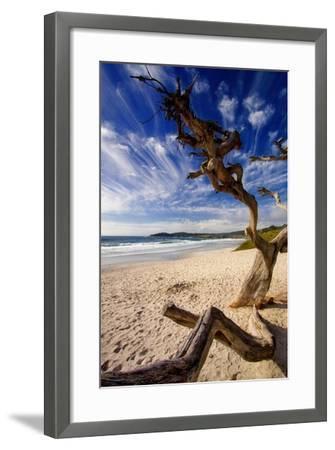 Tree on Carmel Beach, California-George Oze-Framed Photographic Print