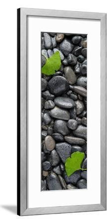 Black Stones And Ginko Leaves Vertical Panorama-Steve Gadomski-Framed Photographic Print
