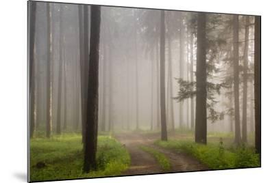 Misty forest in Wachau region of Austria-Charles Bowman-Mounted Photographic Print