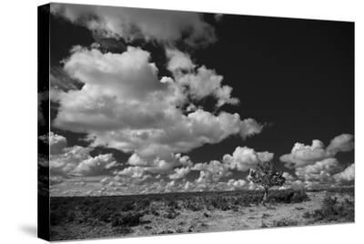 Lone Cedar Tree, New Mexico-Steve Gadomski-Stretched Canvas Print