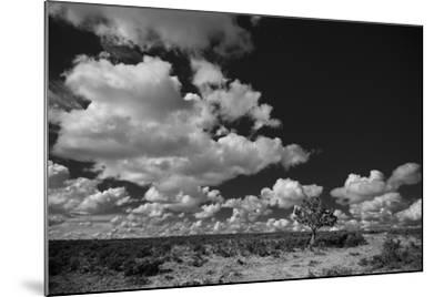 Lone Cedar Tree, New Mexico-Steve Gadomski-Mounted Photographic Print
