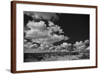 Lone Cedar Tree, New Mexico-Steve Gadomski-Framed Photographic Print