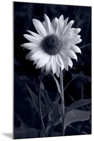 Sunflower In Black & White-Steve Gadomski-Mounted Photographic Print