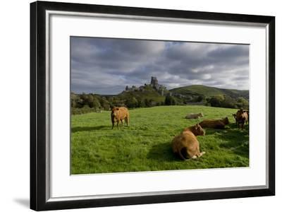 Corfe cows-Charles Bowman-Framed Photographic Print
