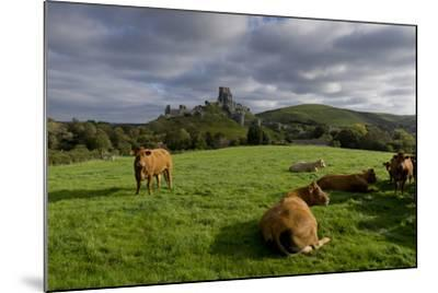 Corfe cows-Charles Bowman-Mounted Photographic Print