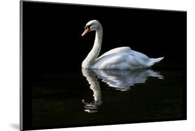 Swan-Charles Bowman-Mounted Photographic Print