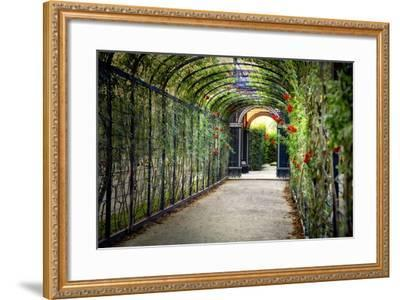 Rose Trellis In Schonbrunn Palace-George Oze-Framed Photographic Print